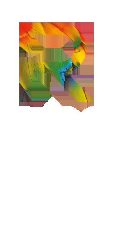 Roel Aarts